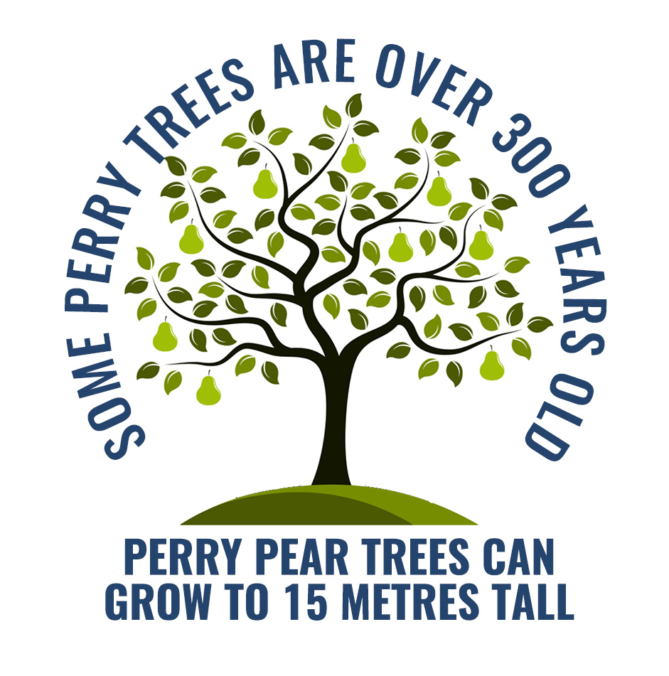 Perry pear tree