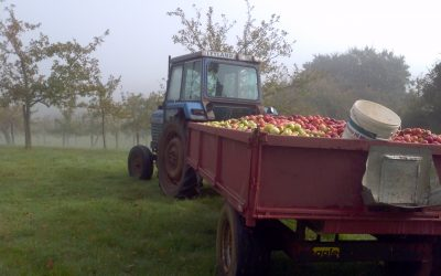 Apple Harvest Photo Competition Results