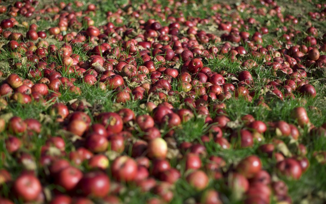 New Cider Qualification set to raise the bar across the industry