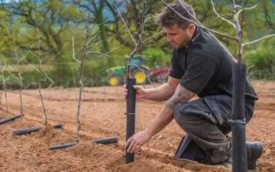 New Orchards Planted at Thatchers