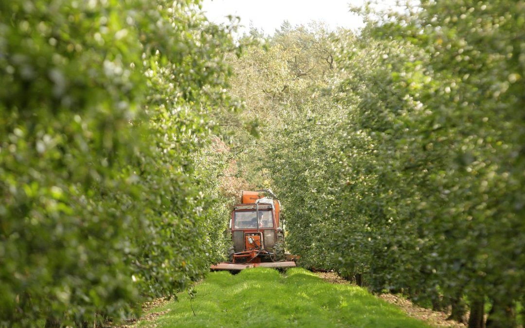 Early harvest and Atlantic storms bring very busy days for Aston Manor Cider