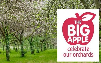 Blossomtime in Herefordshire with The Big Apple