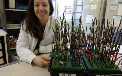 NIAB-EMR CTP PROGRAMME – Carlota Gonzalez – apple dormancy PhD