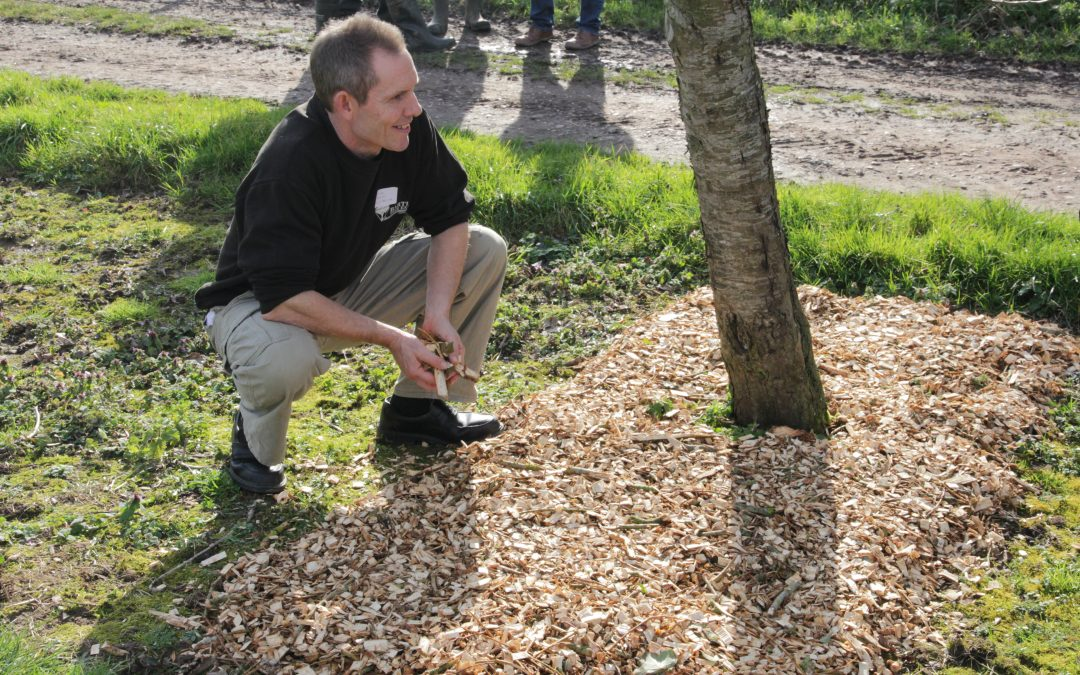 Willow woodchip for top fruit scab control