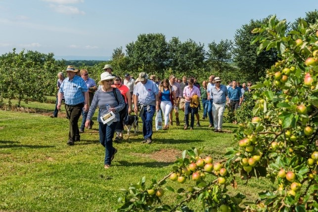 Healthy orchards vital for the growth of the cider industry